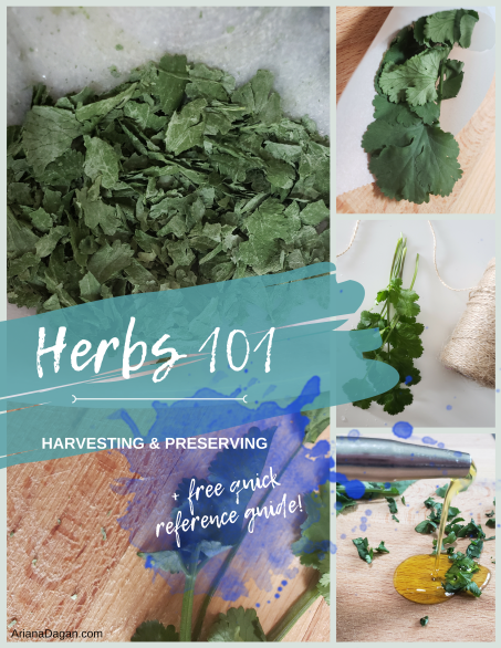 Herbs 101 Harvesting and Preserving by Ariana Dagan